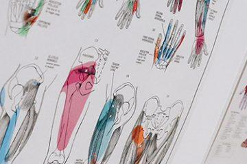 Musculoskeletale Revalidatie